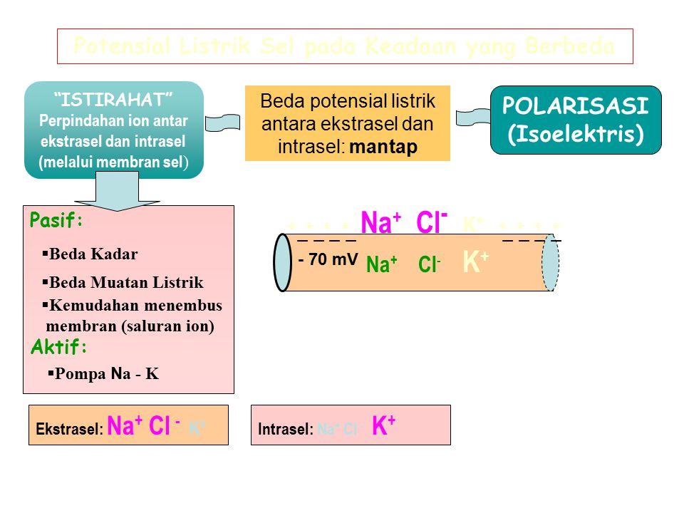 POLARISASI (Isoelektris)