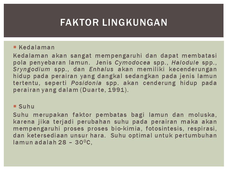 Faktor lingkungan Kedalaman