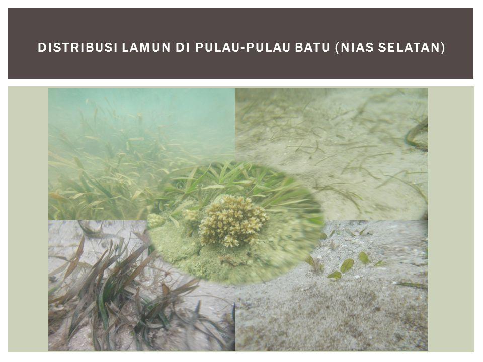 Distribusi lamun di Pulau-pulau batu (nias selatan)