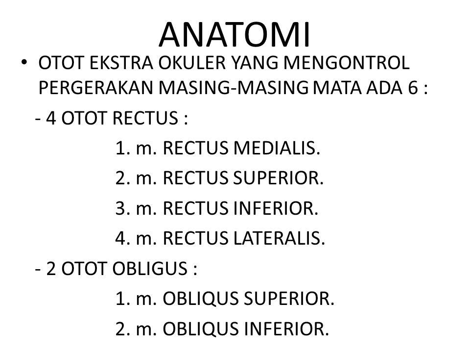 ANATOMI OTOT EKSTRA OKULER YANG MENGONTROL PERGERAKAN MASING-MASING MATA ADA 6 : - 4 OTOT RECTUS :