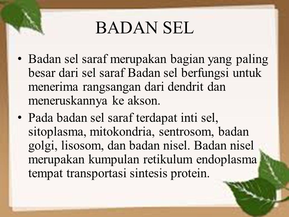 BADAN SEL