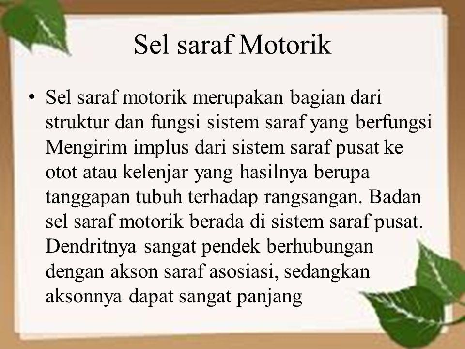 Sel saraf Motorik