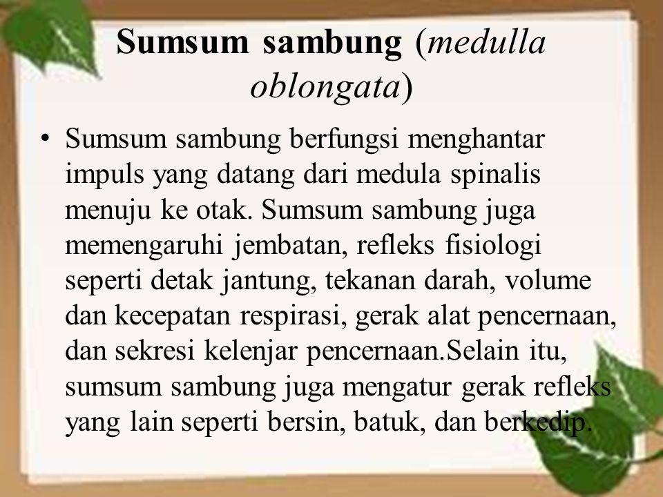 Sumsum sambung (medulla oblongata)