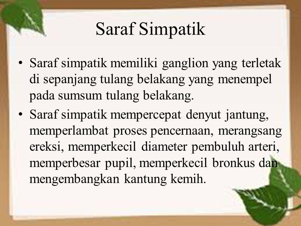 Saraf Simpatik Saraf simpatik memiliki ganglion yang terletak di sepanjang tulang belakang yang menempel pada sumsum tulang belakang.
