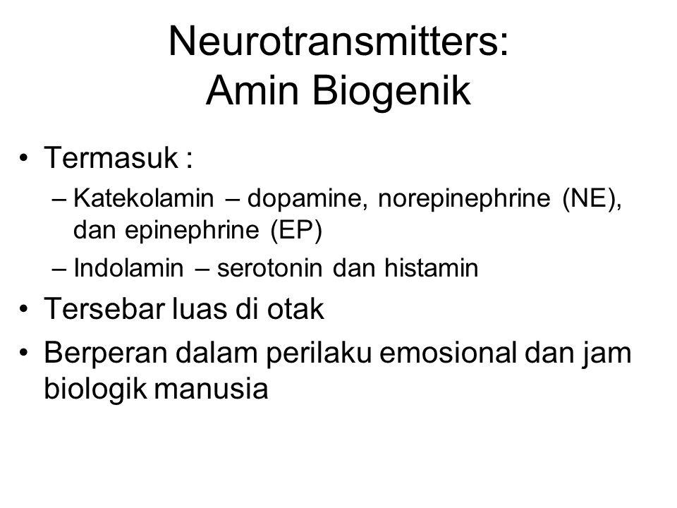 Neurotransmitters: Amin Biogenik