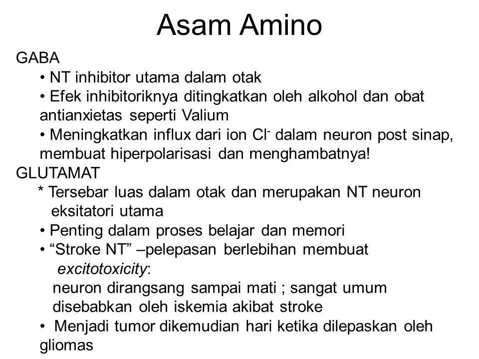 Asam Amino GABA NT inhibitor utama dalam otak