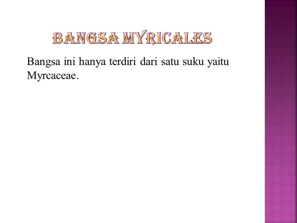 Bangsa Myricales Bangsa ini hanya terdiri dari satu suku yaitu Myrcaceae.
