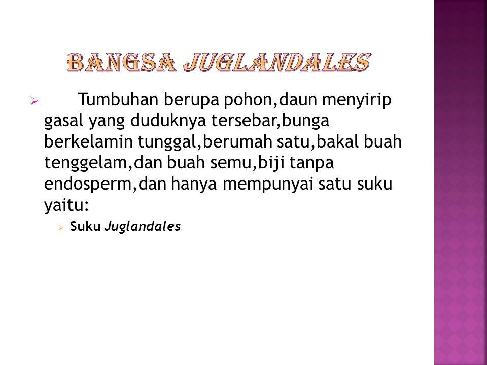 Bangsa Juglandales