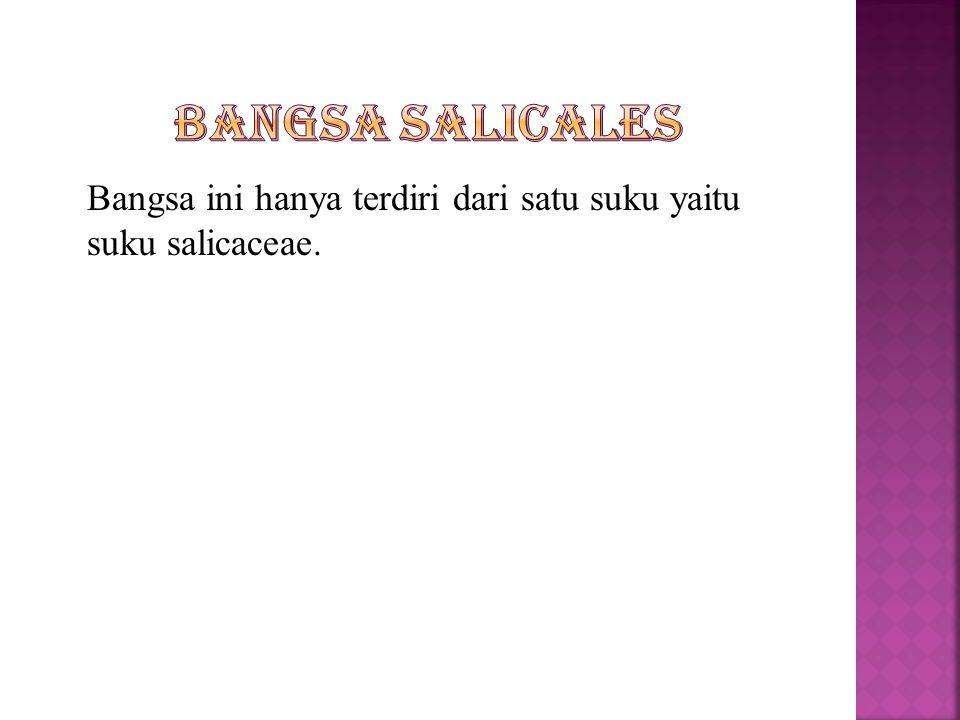 Bangsa Salicales Bangsa ini hanya terdiri dari satu suku yaitu suku salicaceae.