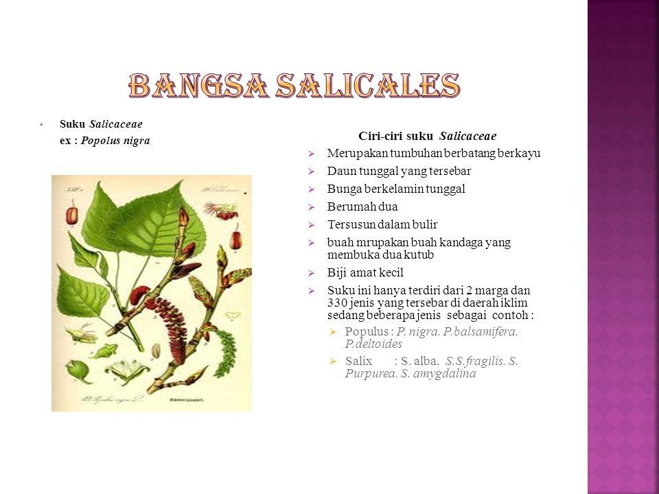 Ciri-ciri suku Salicaceae