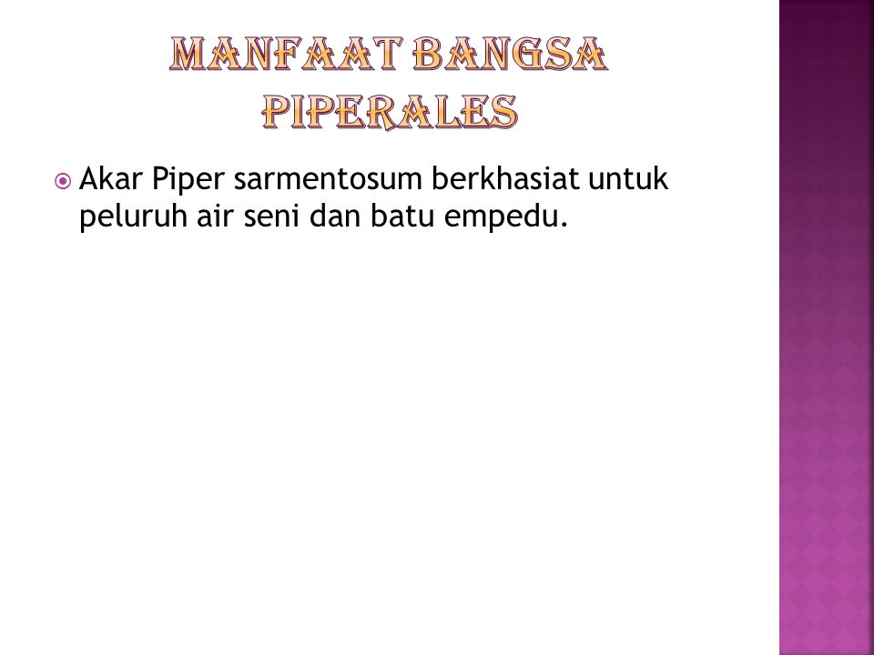 Manfaat bangsa piperales