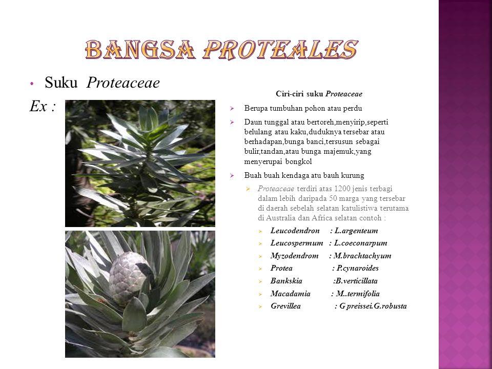 Ciri-ciri suku Proteaceae