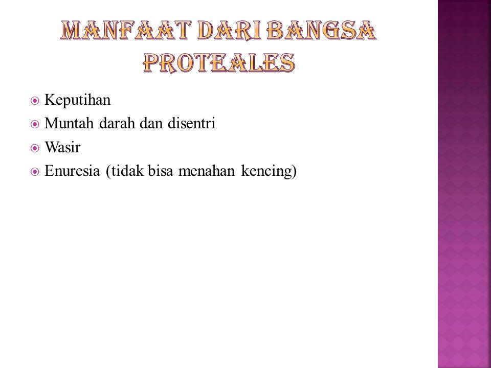 Manfaat dari bangsa proteales