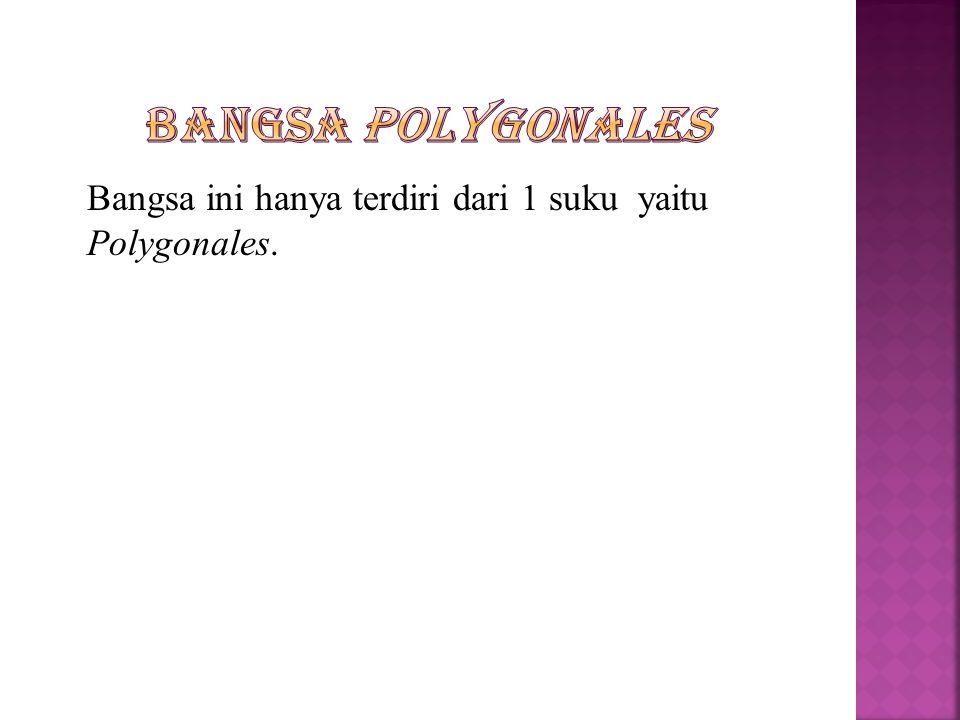 Bangsa Polygonales Bangsa ini hanya terdiri dari 1 suku yaitu Polygonales.