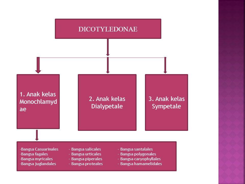 2. Anak kelas Dialypetale