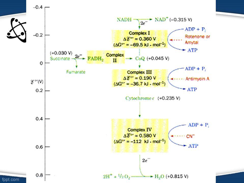 Dan ini merupakan skema reaksi dan inbitor reaksi (merah)