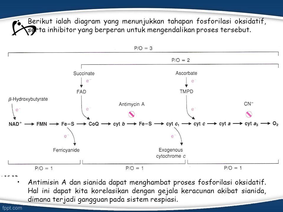 Berikut ialah diagram yang menunjukkan tahapan fosforilasi oksidatif, serta inhibitor yang berperan untuk mengendalikan proses tersebut.