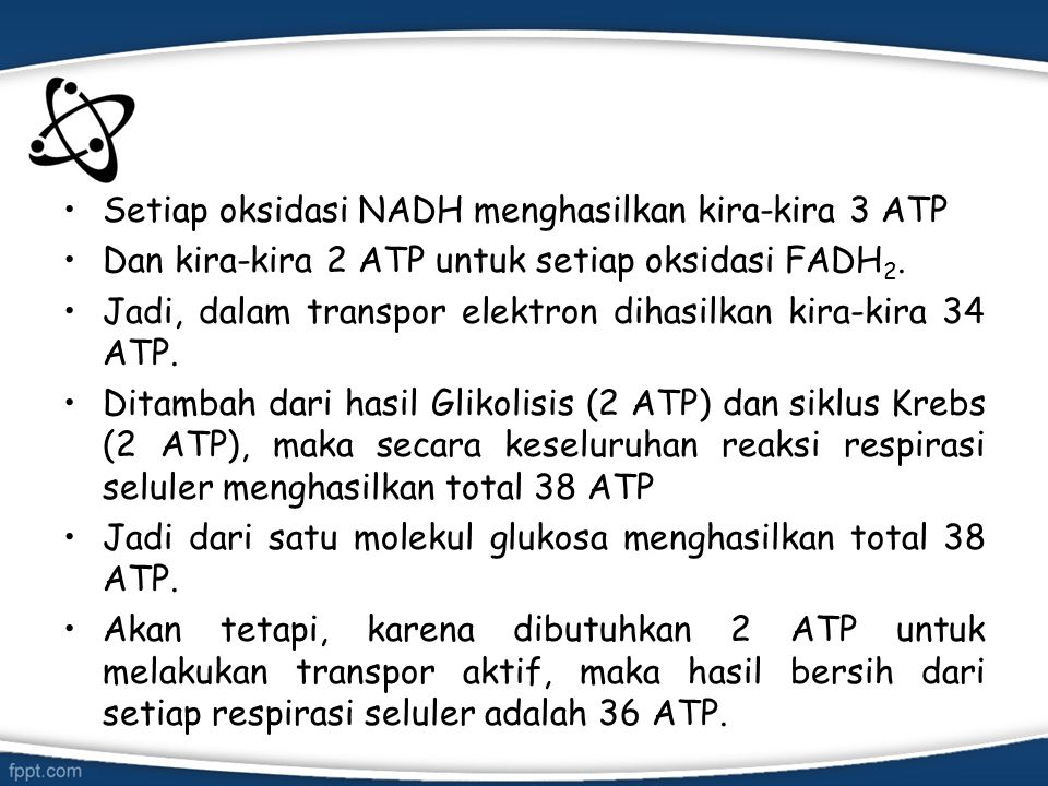 Setiap oksidasi NADH menghasilkan kira-kira 3 ATP