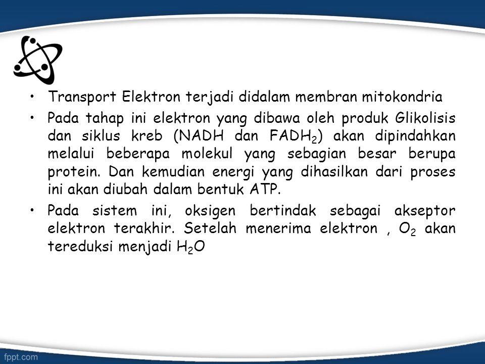 Transport Elektron terjadi didalam membran mitokondria
