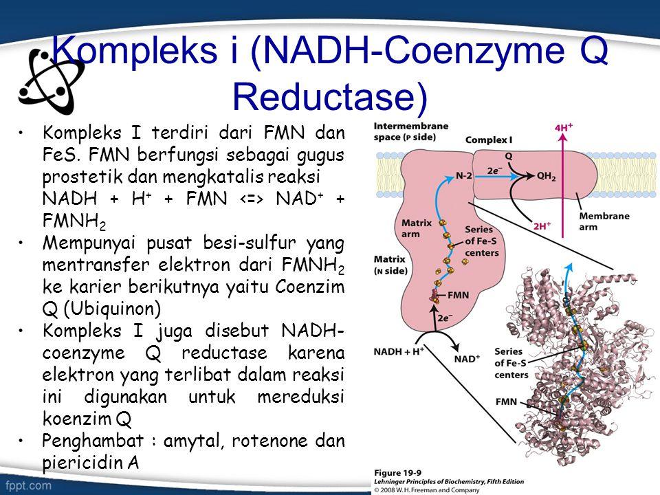 Kompleks i (NADH-Coenzyme Q Reductase)