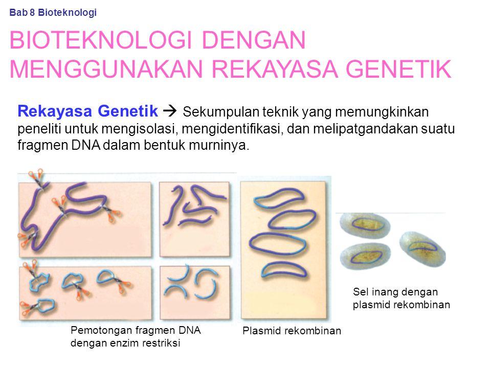 BIOTEKNOLOGI DENGAN MENGGUNAKAN REKAYASA GENETIK