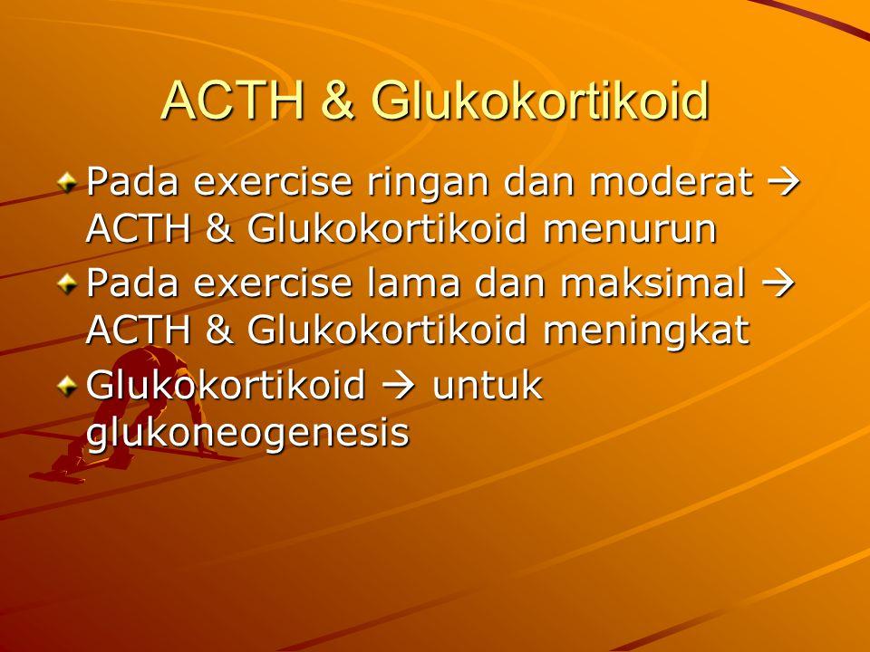 ACTH & Glukokortikoid Pada exercise ringan dan moderat  ACTH & Glukokortikoid menurun.
