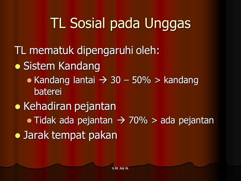 TL Sosial pada Unggas TL mematuk dipengaruhi oleh: Sistem Kandang