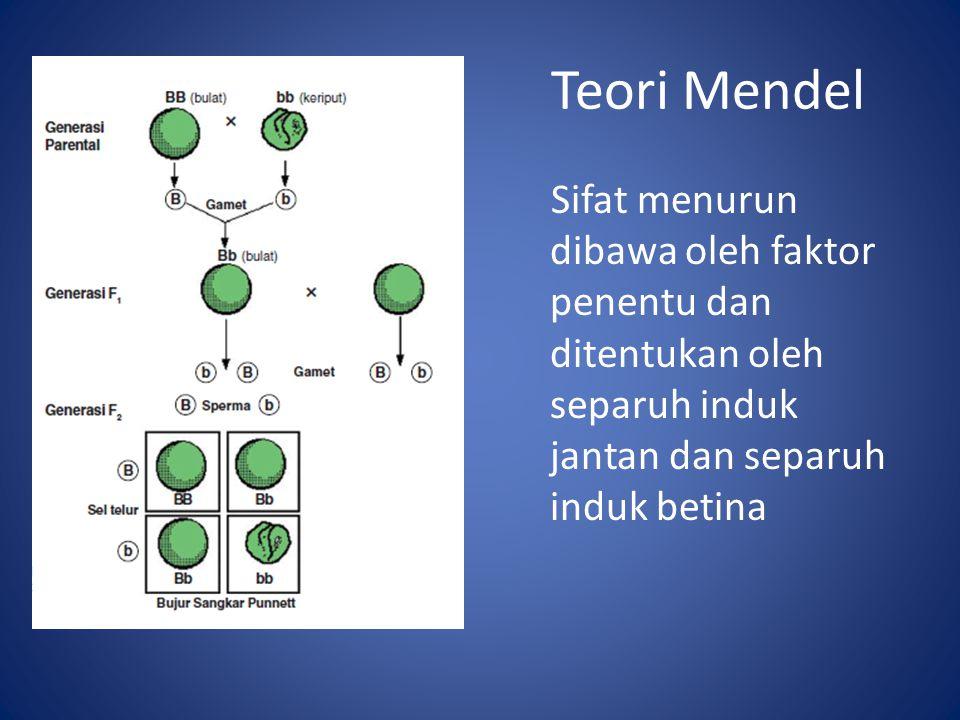 Teori Mendel Sifat menurun dibawa oleh faktor penentu dan ditentukan oleh separuh induk jantan dan separuh induk betina.