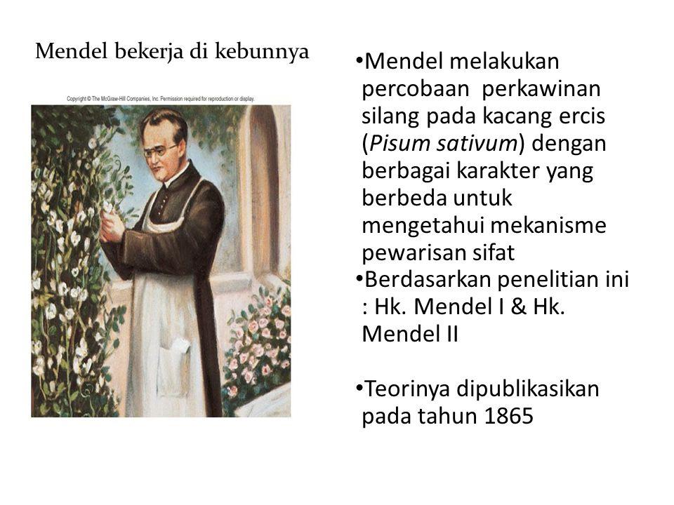 Berdasarkan penelitian ini : Hk. Mendel I & Hk. Mendel II