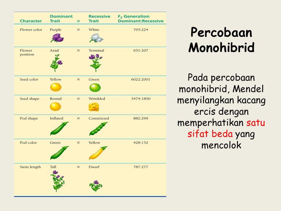 Percobaan Monohibrid Pada percobaan monohibrid, Mendel menyilangkan kacang ercis dengan memperhatikan satu sifat beda yang mencolok.