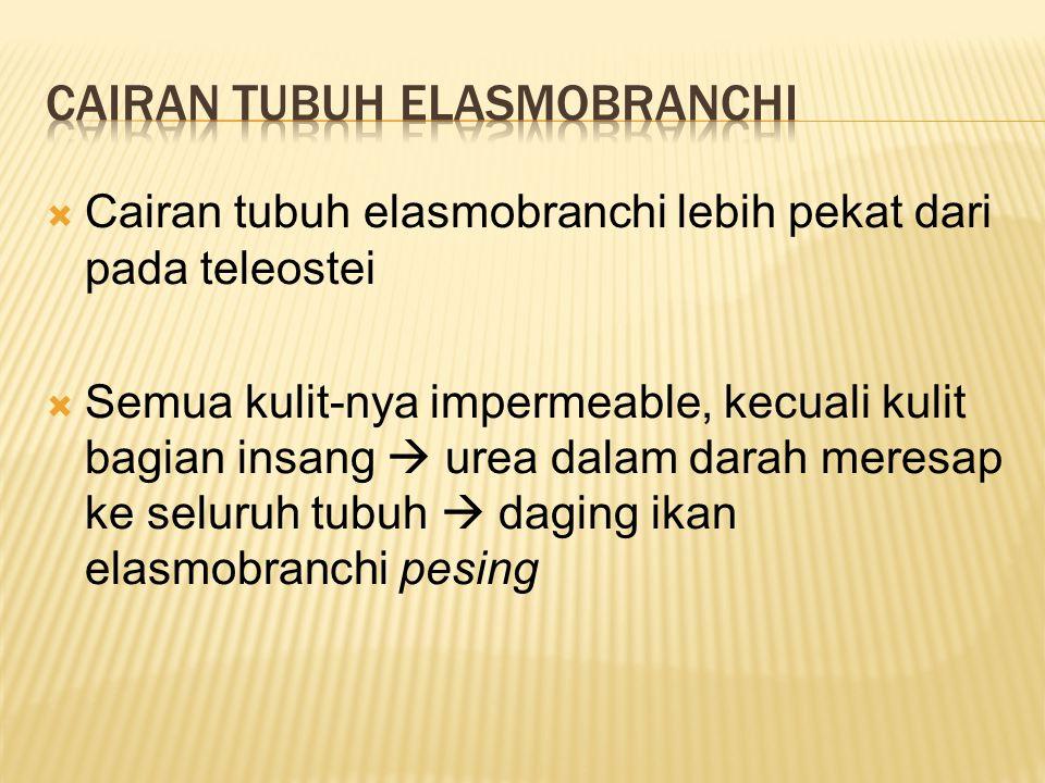 Cairan tubuh elasmobranchi