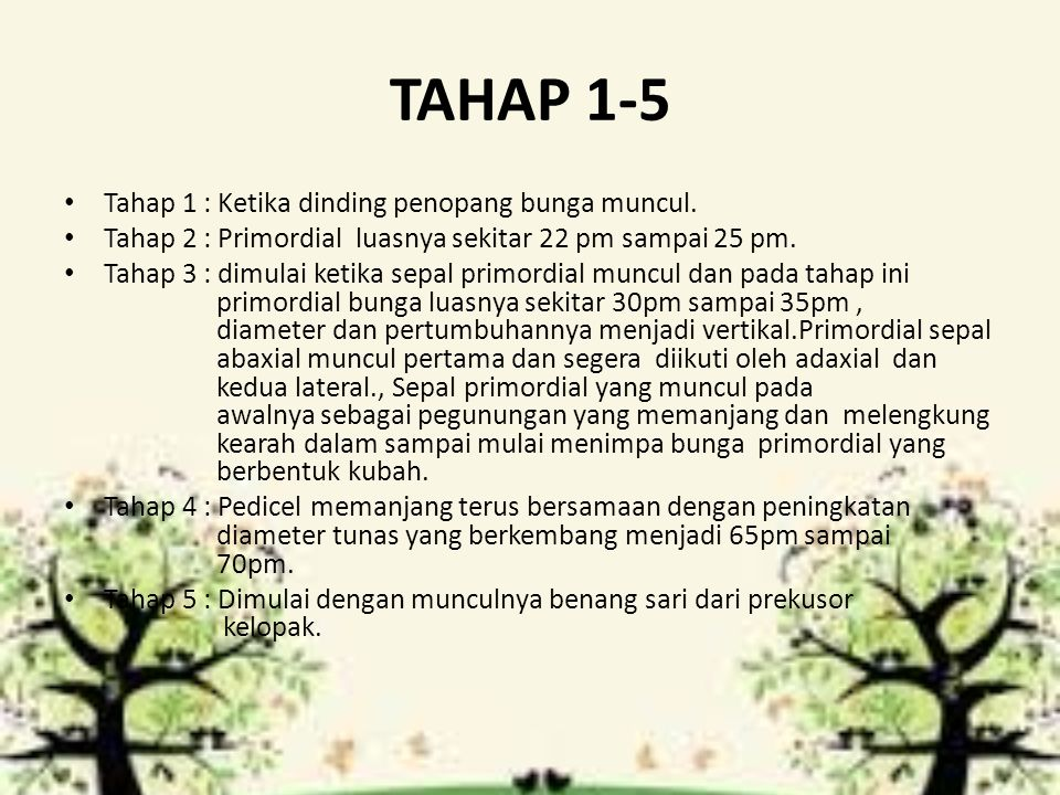 TAHAP 1-5 Tahap 1 : Ketika dinding penopang bunga muncul.