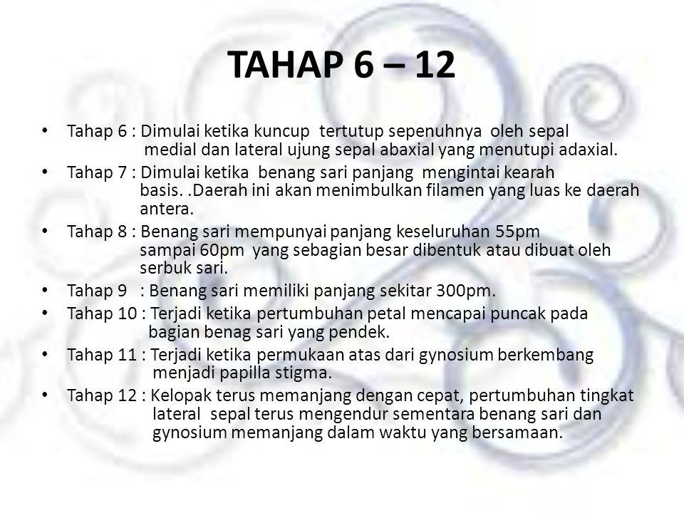 TAHAP 6 – 12
