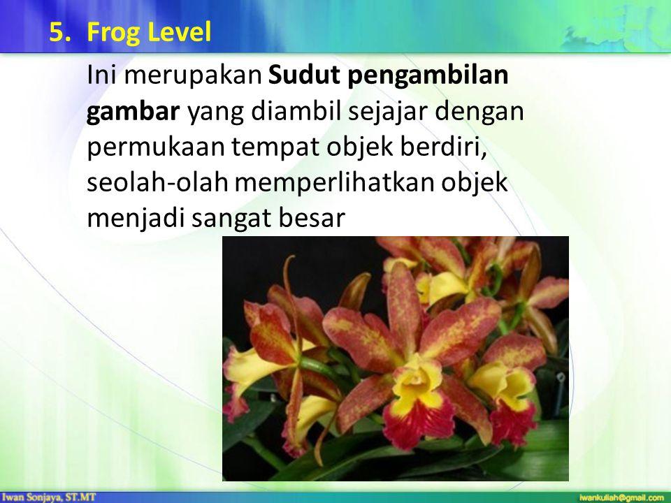 Frog Level