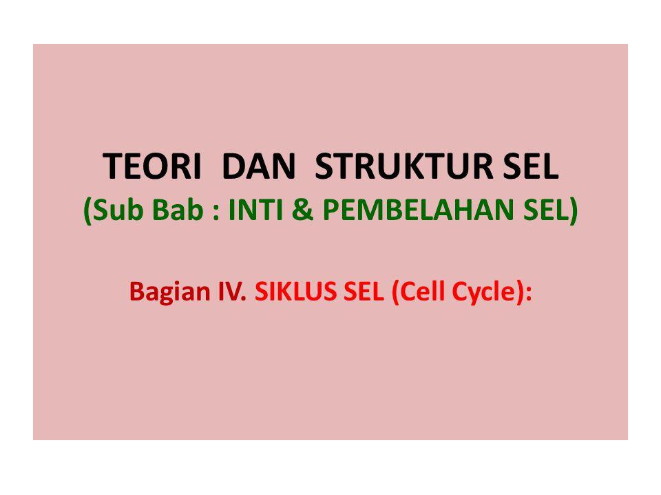 TEORI DAN STRUKTUR SEL (Sub Bab : INTI & PEMBELAHAN SEL) Bagian IV