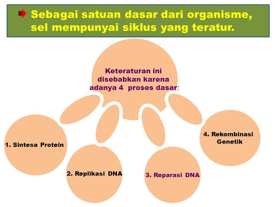 Sebagai satuan dasar dari organisme, sel mempunyai siklus yang teratur.