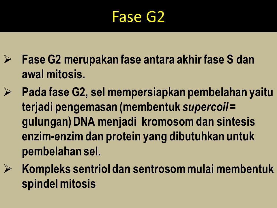Fase G2 Fase G2 merupakan fase antara akhir fase S dan awal mitosis.