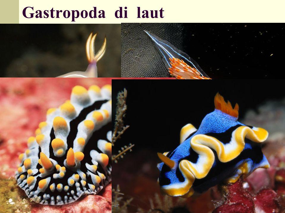 Gastropoda di laut