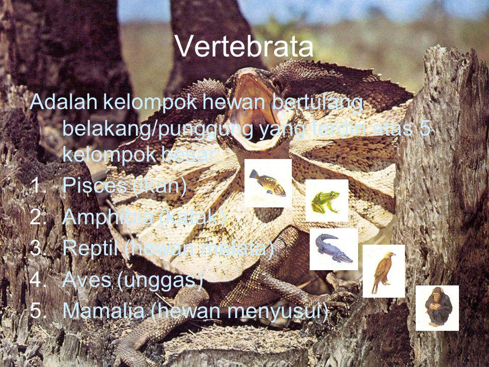 Vertebrata Adalah kelompok hewan bertulang belakang/punggung yang terdiri atas 5 kelompok besar: Pisces (ikan)