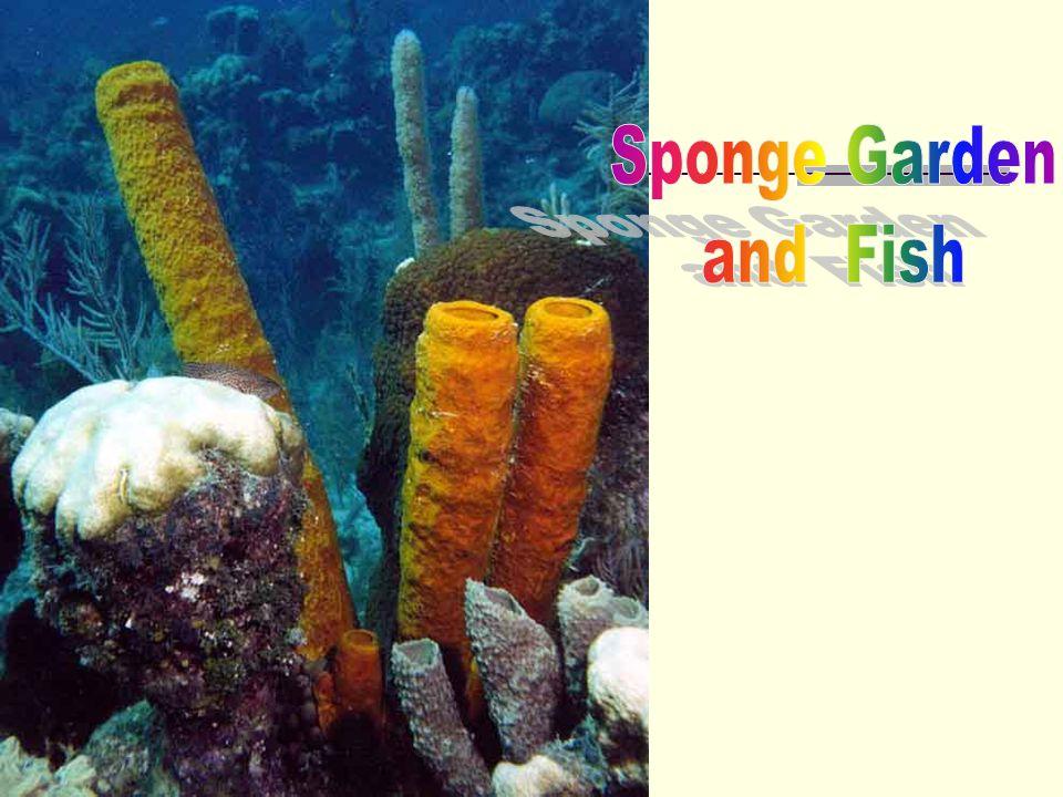 Sponge Garden and Fish