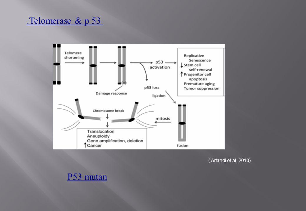 .Telomerase & p 53 ( Artandi et al, 2010) P53 mutan