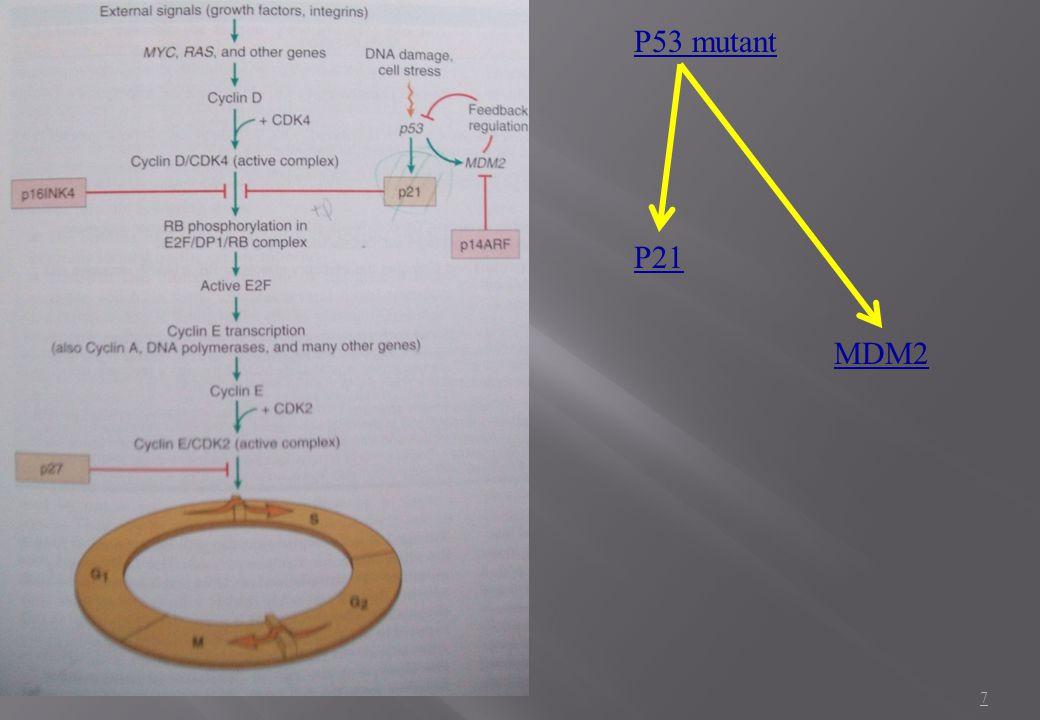 P53 mutant P21 MDM2