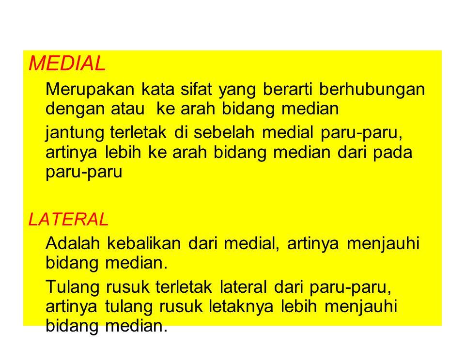 MEDIAL Merupakan kata sifat yang berarti berhubungan dengan atau ke arah bidang median.