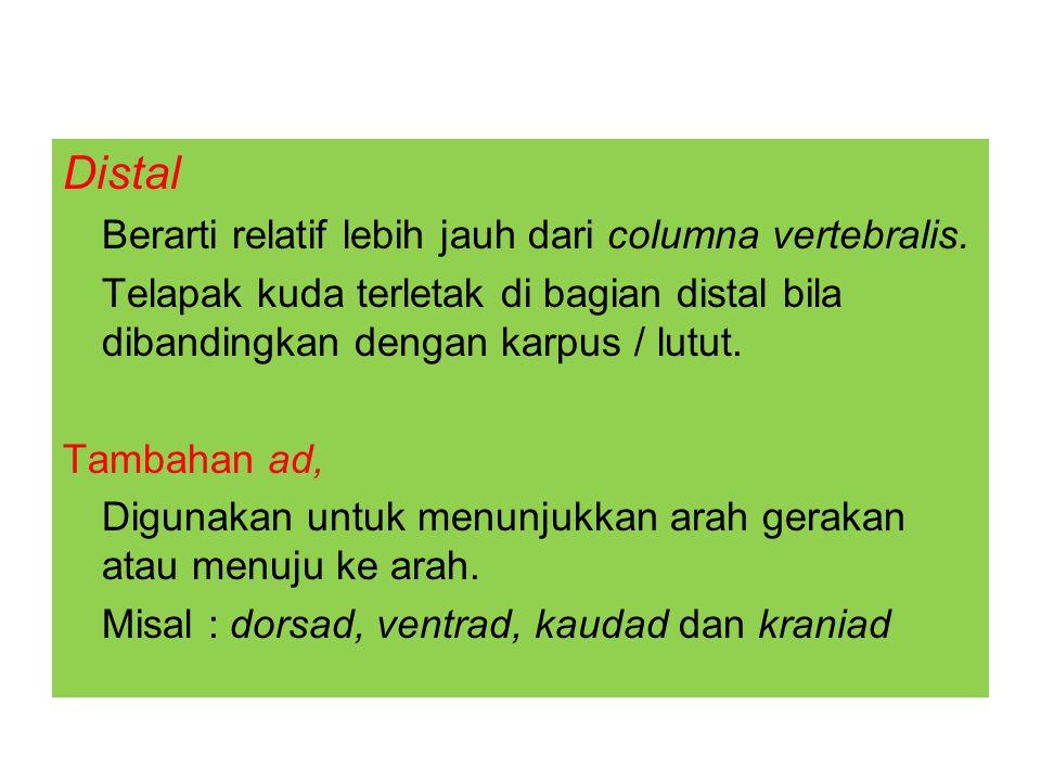 Distal Berarti relatif lebih jauh dari columna vertebralis.