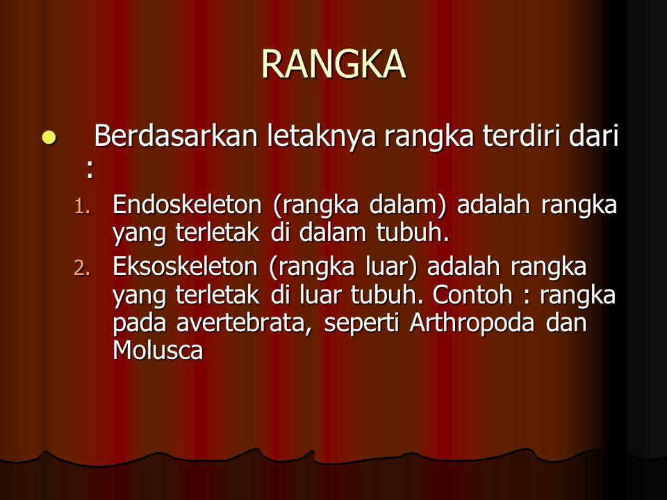 RANGKA Berdasarkan letaknya rangka terdiri dari :