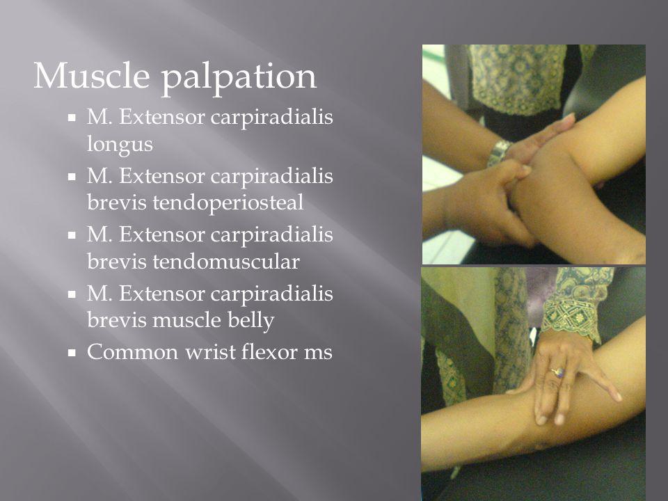 Muscle palpation M. Extensor carpiradialis longus