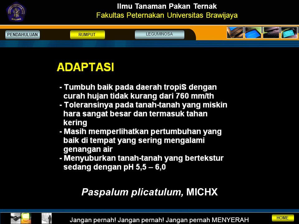Ilmu Tanaman Pakan Ternak Paspalum plicatulum, MICHX