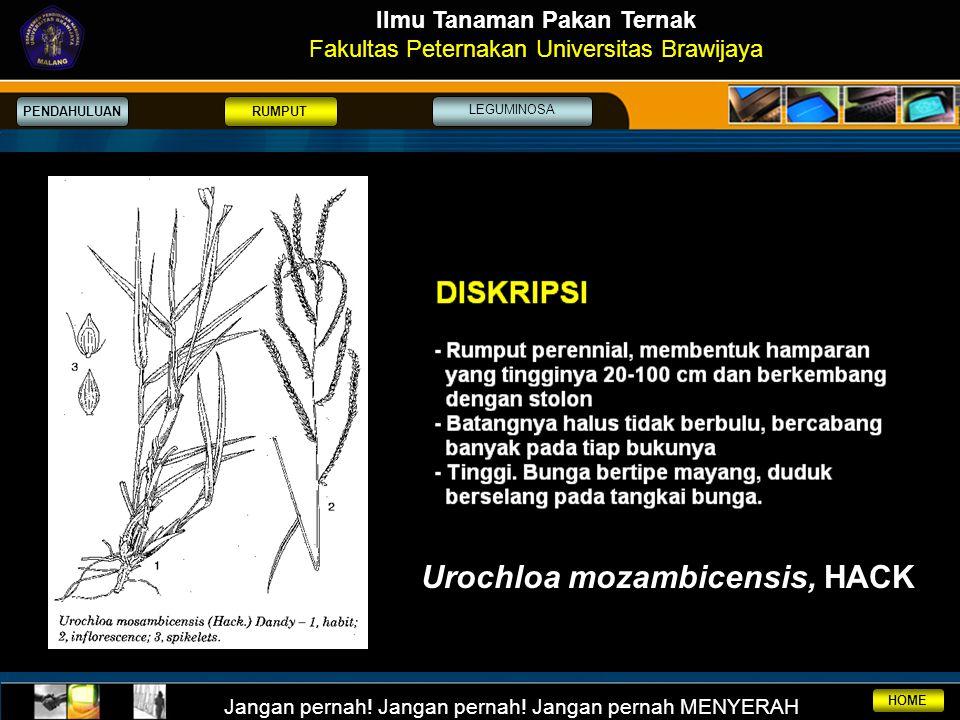 Ilmu Tanaman Pakan Ternak Urochloa mozambicensis, HACK