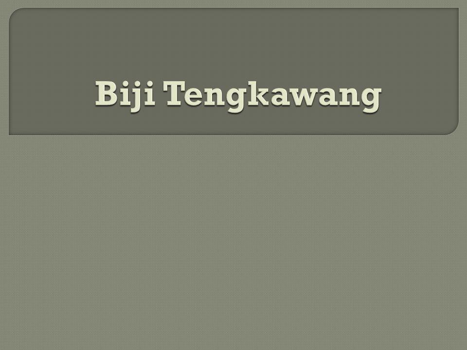 Biji Tengkawang