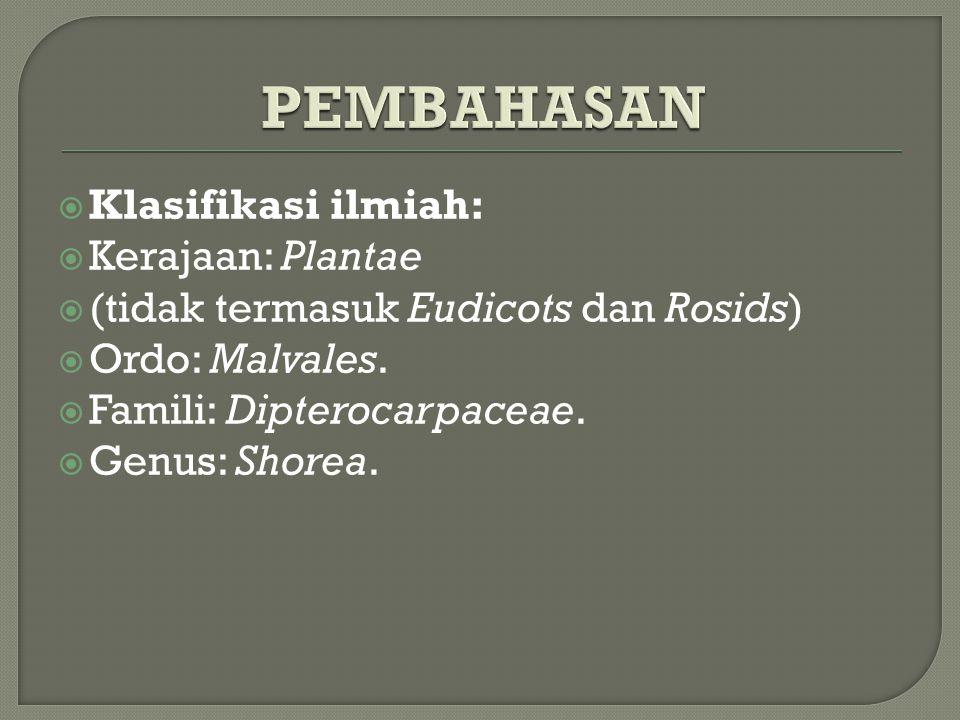 PEMBAHASAN Klasifikasi ilmiah: Kerajaan: Plantae